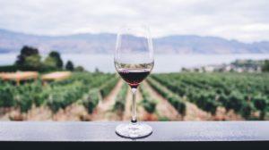 Investir dans le vin vignoble