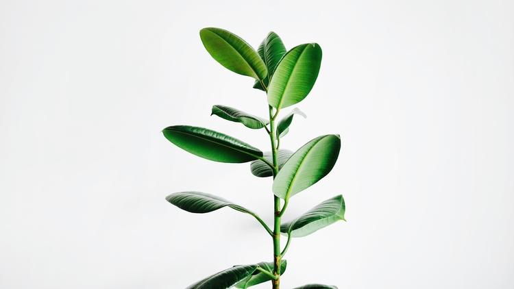 Bilan carbone plante