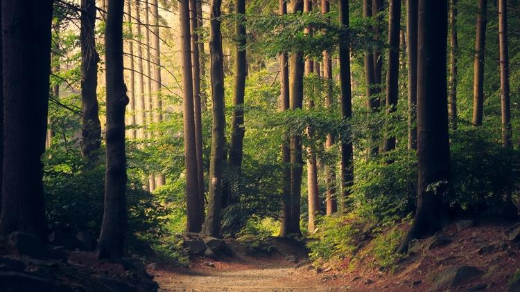 Forêt Investissement